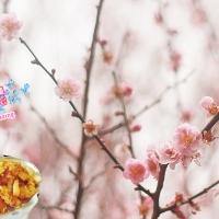 【美食推薦】大埔嘉道理農場賞櫻賞梅|韓國餐廳 CHA:RM 好美味|吃貨伴旅 CACAmazing Travel