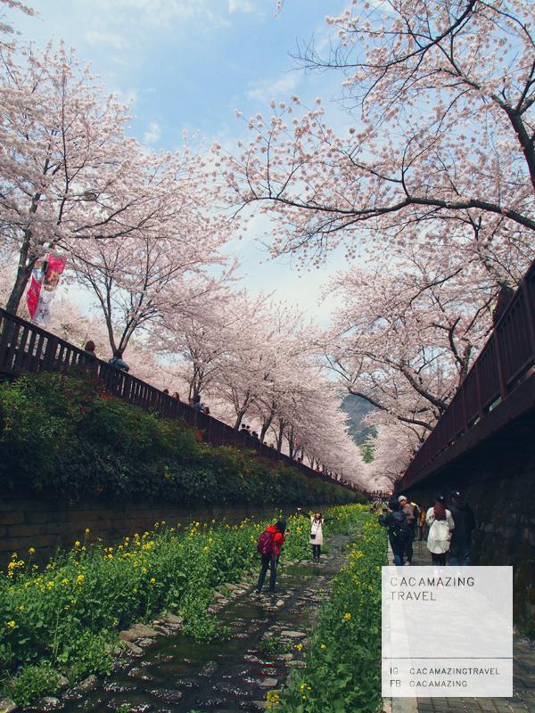 CaCamazing-RomanticBridge44