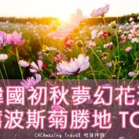 【美景推薦】韓國初秋夢幻花海|推薦波斯菊勝地 TOP 3|吃貨伴旅 CACAmazing Travel