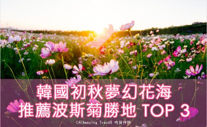 【美景推薦】韓國初秋夢幻花海|推薦波斯菊勝地 TOP 3|吃貨伴旅 CACAmazingTravel