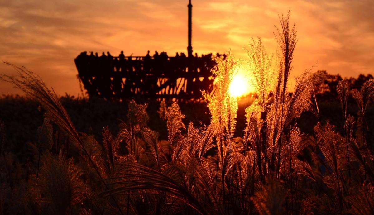 【美景推薦】天空公園 2017 韓國首爾紫芒節 서울억새축제|吃貨伴旅 CACAmazing Travel