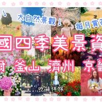 【美景推薦】韓國一年四季賞花 景點|首爾 釜山 濟州 京畿道 |吃貨伴旅 CACAmazing Travel