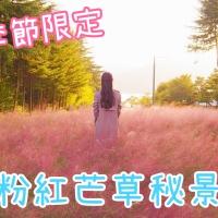 【韓國美景】季節限定 粉紅芒草秘景|吃貨伴旅 CACAMAZING TRAVEL